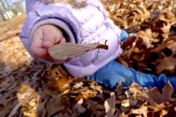 01.05.13 | leaf