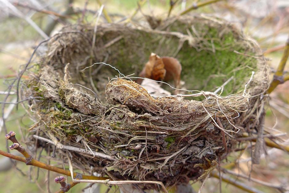 01.09.13 | nest