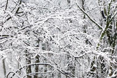 03.25.13   spring snow