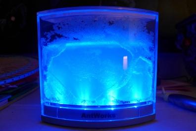 05.30.13 | glowing ant farm