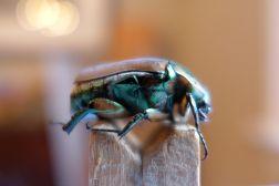 08.06.13   i had a little beetle
