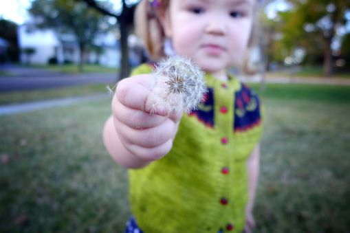 09.25.13 | dandelions and hand-knit sweaters