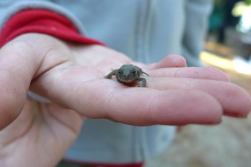 06.14.13 | tiny frogs