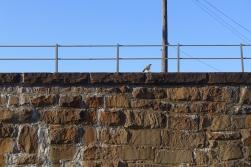 10.20.13   bird of prey