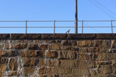 10.20.13 | bird of prey