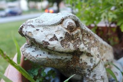 04.15.14 | weathered frog