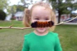 10.19.13   woolly bear moustache (or mustache)