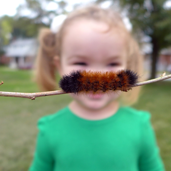 10.19.13 | woolly bear moustache (or mustache)