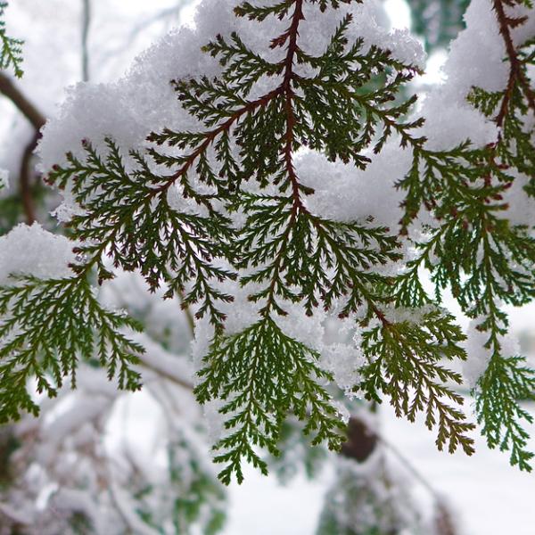 12.10.13 | under the snow