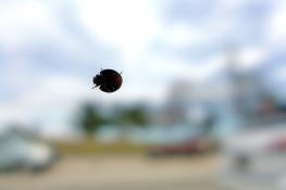 04.05.14 | the ladybugs are back