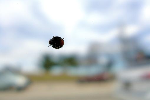 04.05.14   the ladybugs are back