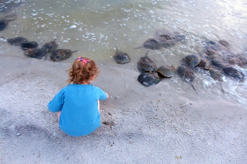 06.12.14   i think she thought they were rocks