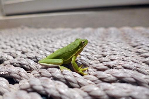 07.29.14 | front door frog