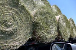 06.02.14 | happy breezy rolls of grass