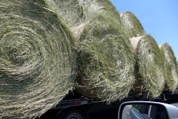 06.02.14   happy breezy rolls of grass
