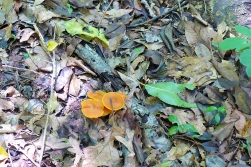 06.19.14   forest floor fungus