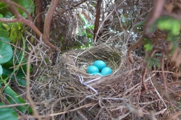 06.22.14 | robin egg blue