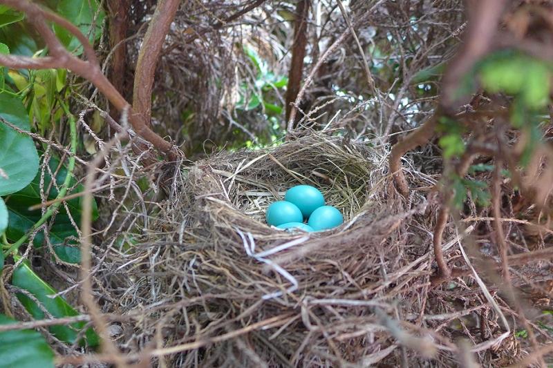 06.22.14 | robin egg blue