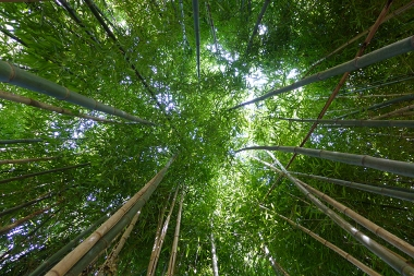 08.30.14 | under the bamboo ceiling