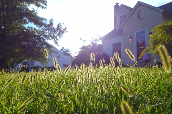 09.07.14 | time to mow the lawn