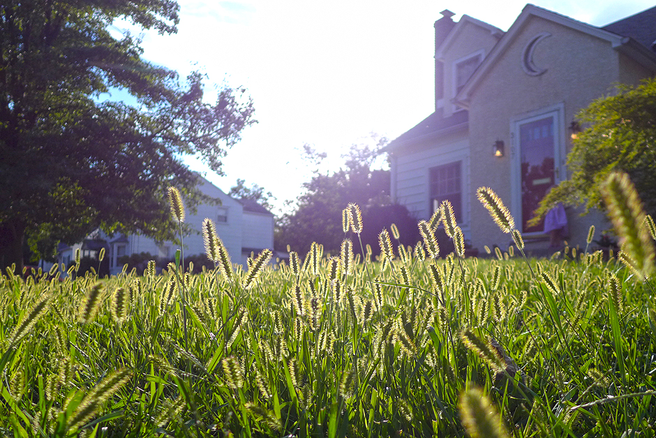 09.07.14   time to mow the lawn