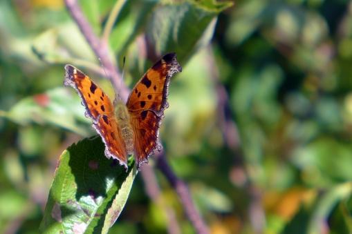 10.13.14   butterfly