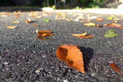 10.08.14   fall