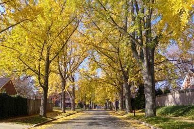 11.12.14 | yellow