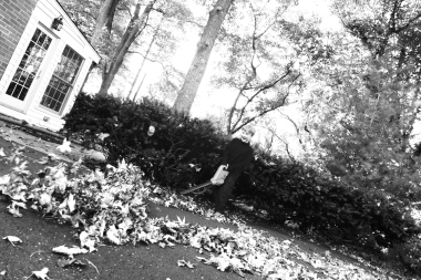 11.08.14   someone discovered the leaf blower