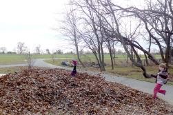 11.22.14   leaf pile