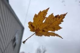 11.06.14 | fall