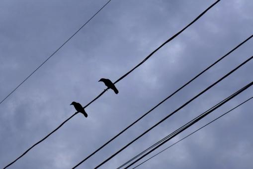 12.16.14   the birds