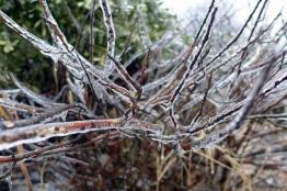 03.04.15 | crunchy branches (plus a bear in underwear!)
