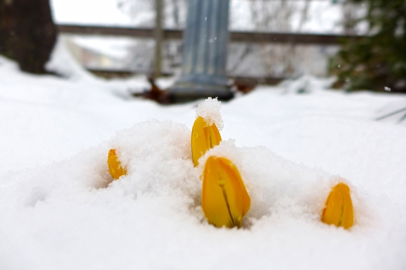 03.20.15 | first day of spring?