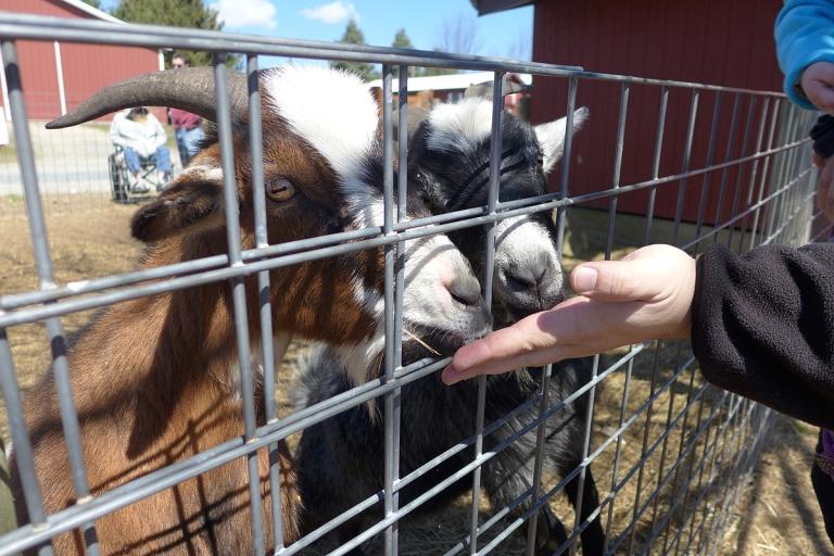 01.19.17 | totes ma goats