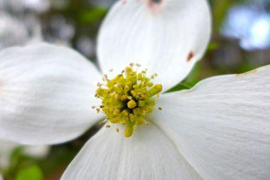 05.05.15 | it's pollen season