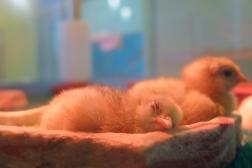 07.25.15   incubator