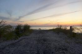 08.15.15 | beach fox
