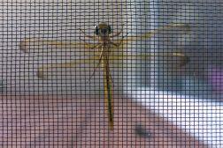 09.21.15 | dragonfly