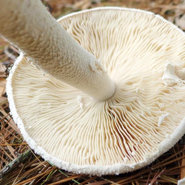 06.07.16 | magic mushroom