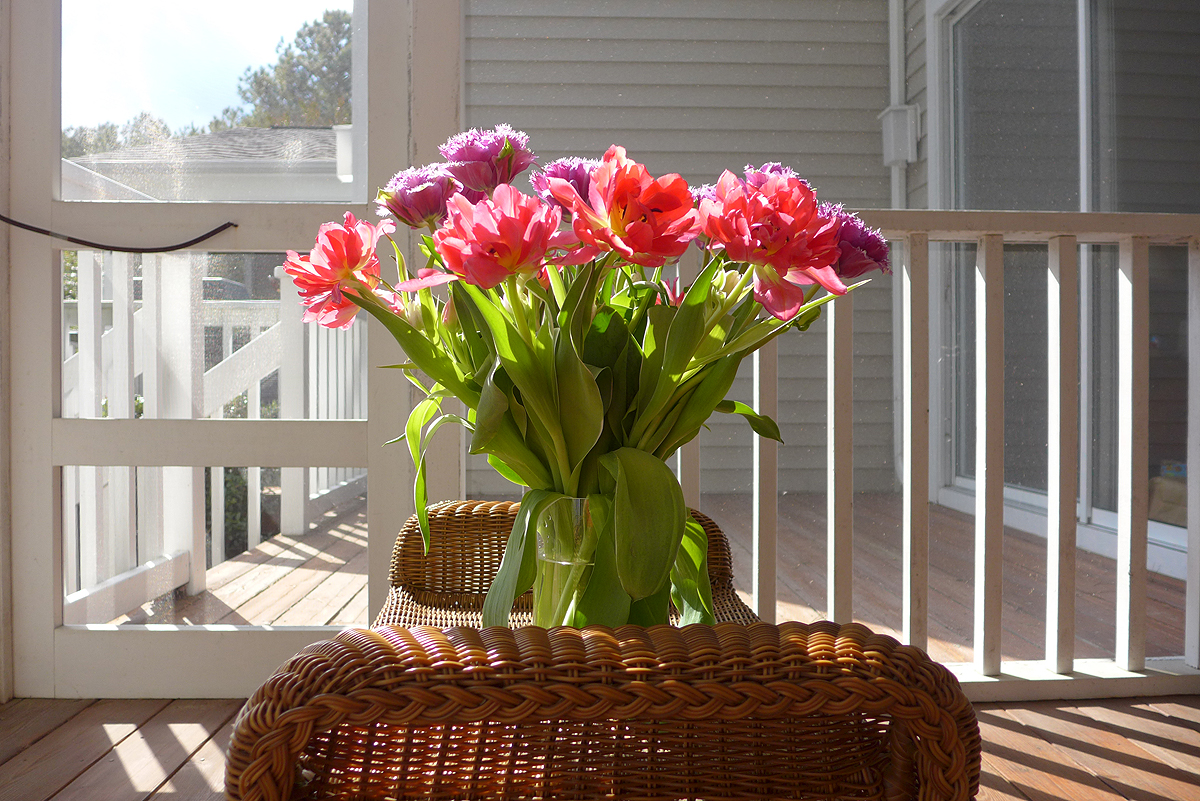 10.19.15   15 years (plus 4 days) and some amazing tulips