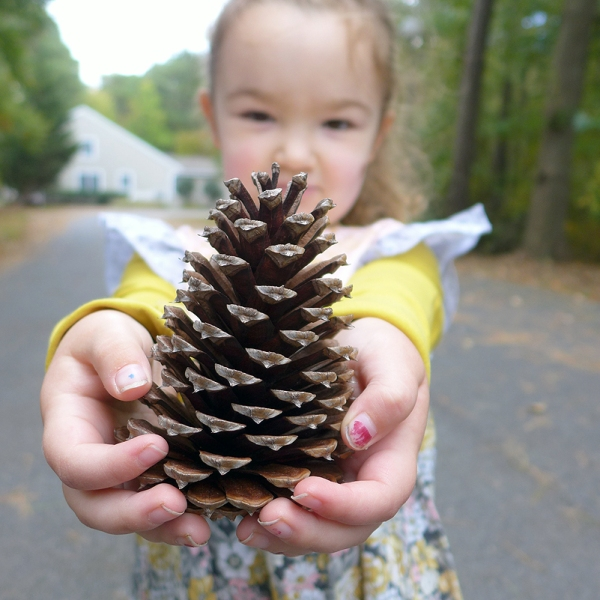 10.20.15 | pine cone and dirty fingernails