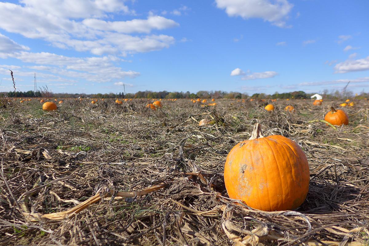 11.14.15 | leftover pumpkins