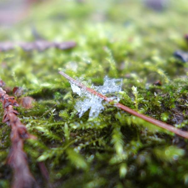 02.09.16 | snowflake and moss