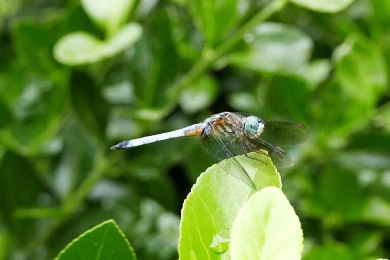 07.18.16 | dragonfly