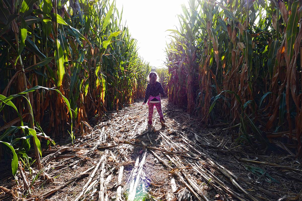 09.24.16 | corn maze