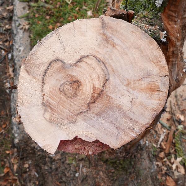 10.13.16 | love tree