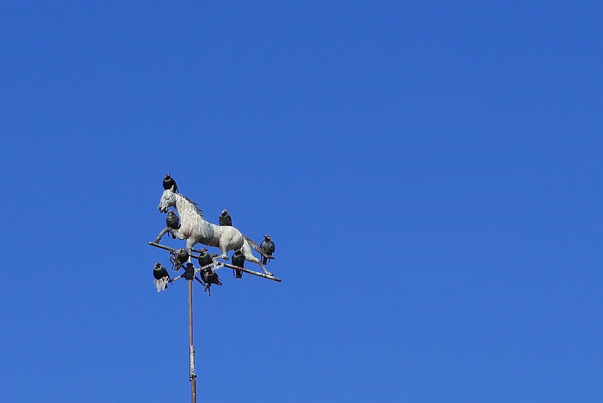 02.03.18 | birds on the vane
