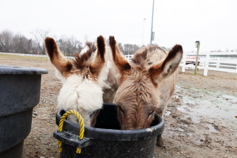 02.24.18 | thirsty donkeys