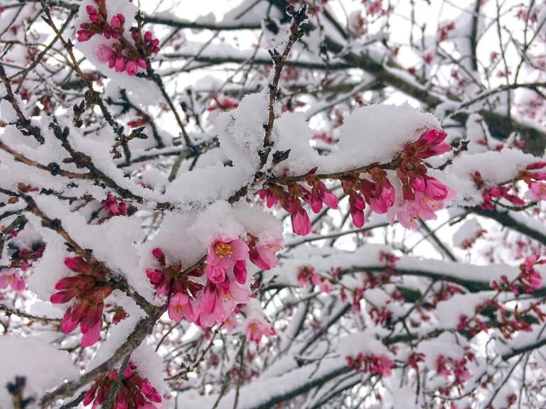 03.22.18 | springtime contrast